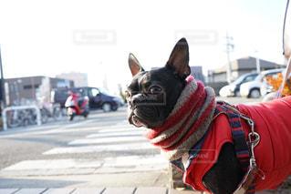 道路の真ん中に座っている犬の写真・画像素材[968723]