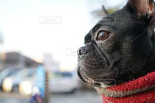 犬は赤い帽子をかぶって、カメラを見ての写真・画像素材[968725]