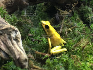 動物の写真・画像素材[651134]