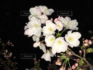 花の写真・画像素材[651152]