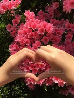 花の写真・画像素材[655032]