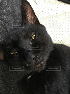 猫の写真・画像素材[677562]