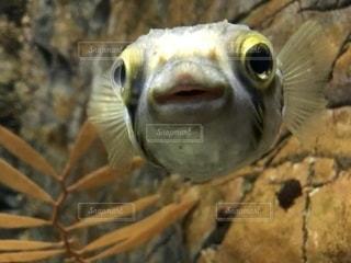 笑う魚の写真・画像素材[2349272]