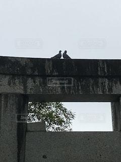 鳥居の上の鳩の写真・画像素材[2863907]