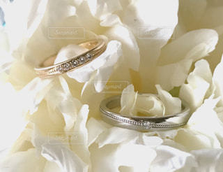指輪の写真・画像素材[651543]