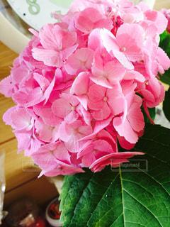 花の写真・画像素材[651556]