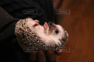 動物の写真・画像素材[651711]