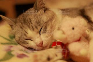 猫の写真・画像素材[653586]