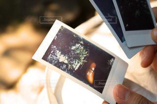 植物の写真・画像素材[653599]