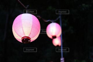 ピンクのちょうちんの写真・画像素材[850524]