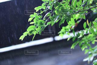 雨の日の写真・画像素材[850525]