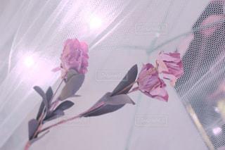 ピンクのドライフラワーの写真・画像素材[1162548]