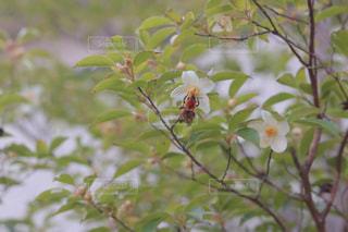 庭の木に止まったハチ。の写真・画像素材[1246006]