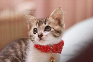 赤い首輪をしている子猫の写真・画像素材[2741997]