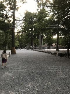 公園の木の写真・画像素材[858539]