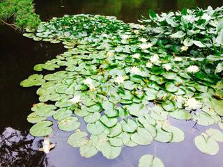 近くに池のアップの写真・画像素材[752494]