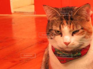 猫の写真・画像素材[652568]