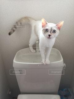 猫の写真・画像素材[652647]