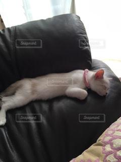 猫の写真・画像素材[653396]