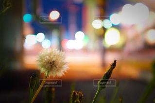 夜景の写真・画像素材[652654]