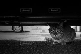 猫の写真・画像素材[652664]