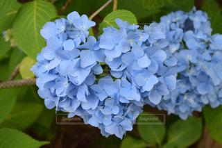 花の写真・画像素材[652865]