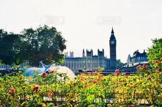 花の写真・画像素材[653227]