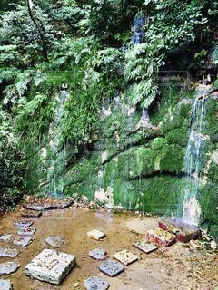 自然の写真・画像素材[653571]
