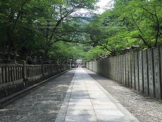 神社の写真・画像素材[652988]