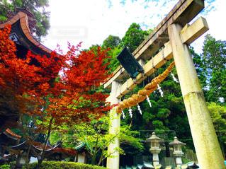 神社 - No.655125