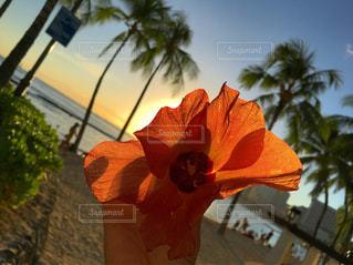 ビーチの写真・画像素材[656343]
