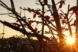 秋の写真・画像素材[654250]