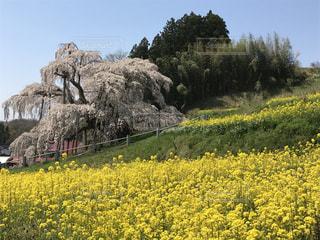 春の写真・画像素材[654641]