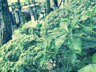 景色 - No.654648