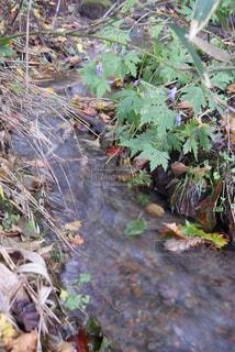 秋の写真・画像素材[654701]