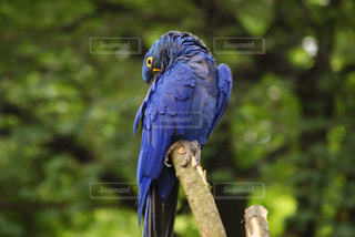 鳥の写真・画像素材[656402]