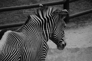 動物の写真・画像素材[656403]