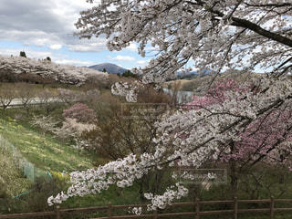 春の写真・画像素材[657022]