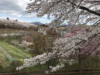 春 - No.657022
