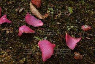 花の写真・画像素材[661115]