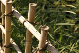 木の棒の上に座っている鳥の写真・画像素材[719843]
