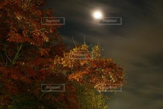 近くの木のアップの写真・画像素材[719863]