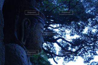 近くの木のアップの写真・画像素材[719865]