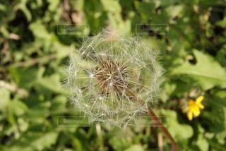 近くの植物のアップの写真・画像素材[720745]