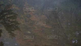 水面の紅葉の写真・画像素材[1610260]