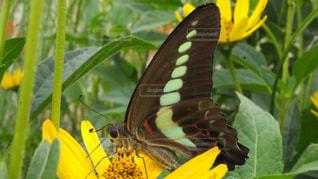 緑の葉と黄色の花の写真・画像素材[1610293]