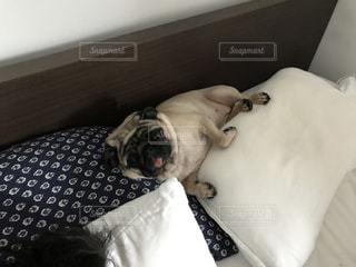 ベッドの上に横たわる犬の写真・画像素材[711423]