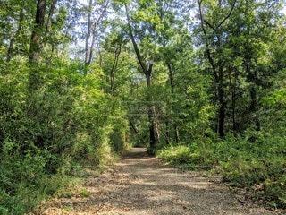 森の木で森林浴の写真・画像素材[2495902]