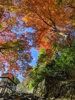 奥多摩で撮った紅葉の写真・画像素材[2766784]
