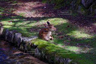 芝生に座っているクマの写真・画像素材[721200]